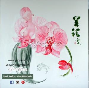 crop-orchidee-pflanzen